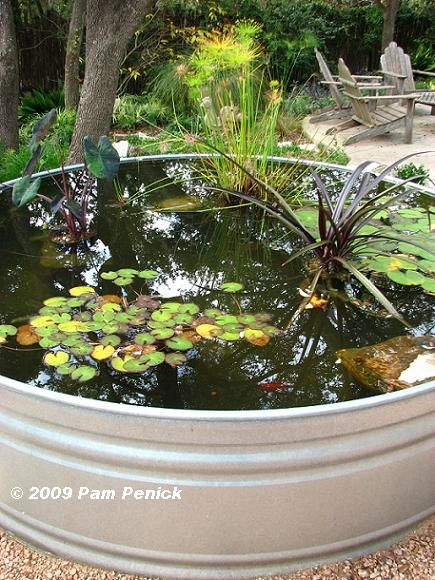 Another Stock Tank Pond!!! Bebeu0027!!! Nice Variety Of Water Plants!!!