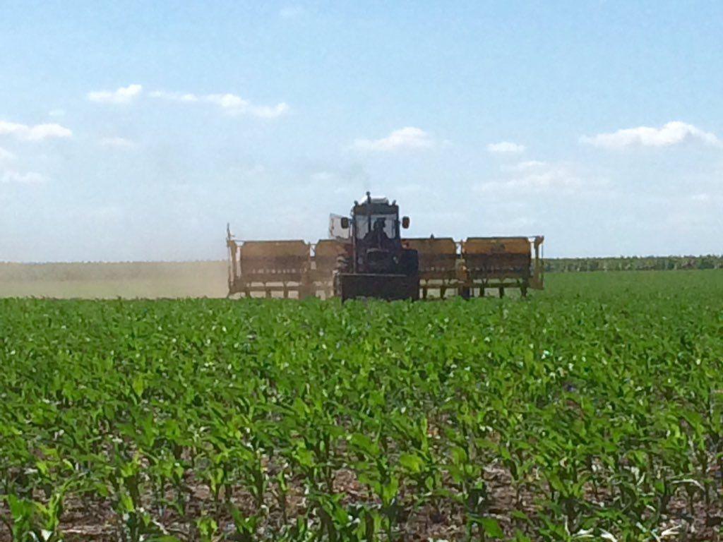 """Francisco Perkins on Twitter: """"En #Campo cambiamos y aumentamos el maíz para la #Siembra15 Ahora lo fertilizamos https://t.co/Y4nJOHX0Yk"""""""