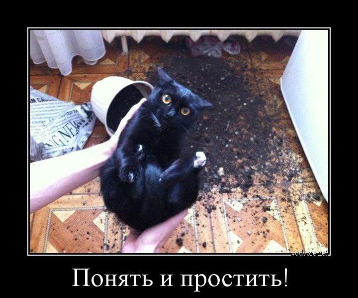 правило, смешные коты фото понять и простить оказали