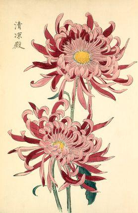 Seirioden Japanese Woodblock Printing Flower Art Botanical Prints