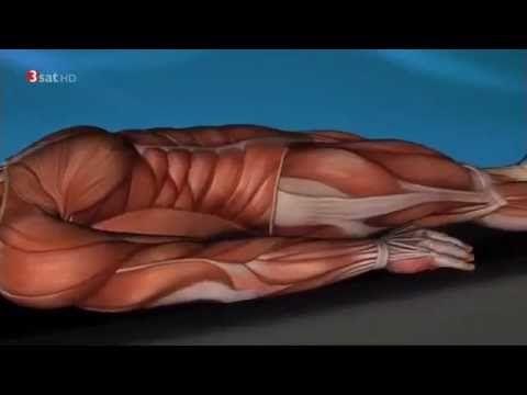 Wie unsere Muskeln unser Leben beeinflussen - YouTube