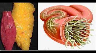 Qué le pasa a tu cuerpo cuando comes 3 HUEVOS todos los días - YouTube