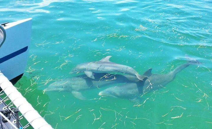 Florida Keys Dolphins Florida Key West Florida Keys
