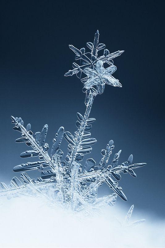 Snow flower | Flickr - Photo Sharing!