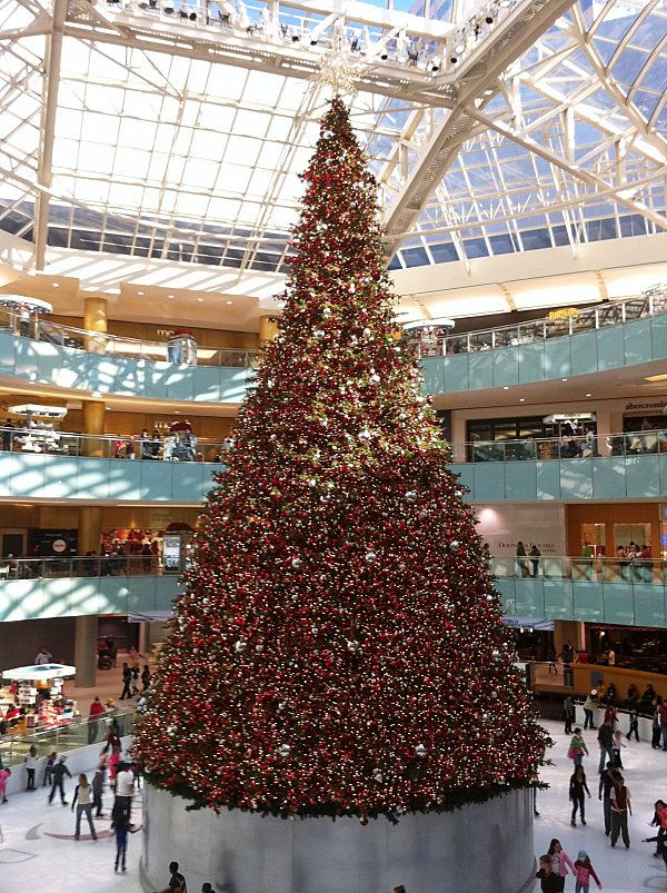 The 10 Most Amazing Christmas Trees In The U S Amazing Christmas Trees Christmas Tree Christmas