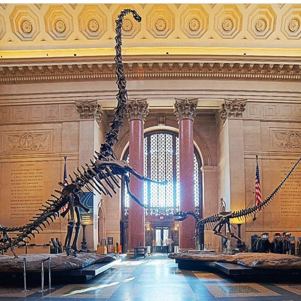 Dinosaur Lover In Your Family The American Museum Of Natural History Has One Of The Largest Fossil Collections In The World A New York Travel Grand Hyatt Tourist Spots