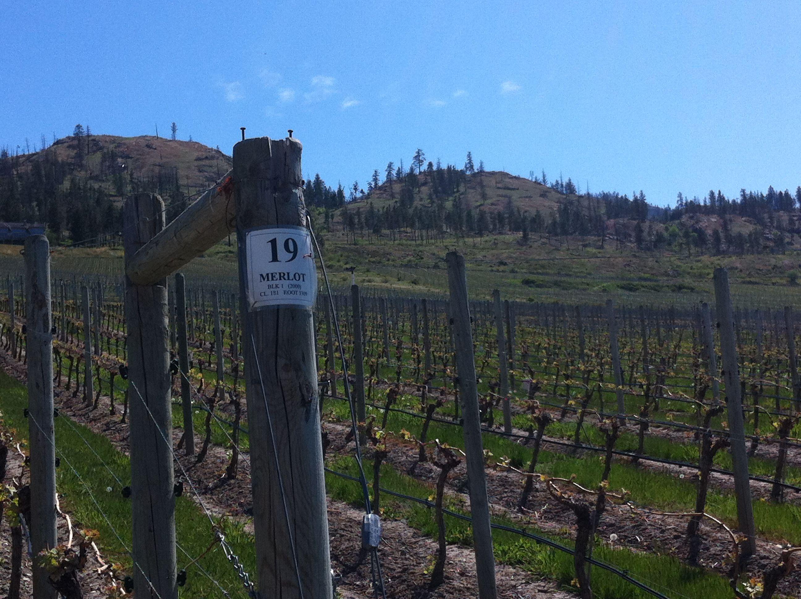 Cedar Creek Winery Kelowna Bc Cedar Creek Winery Cedar Creek