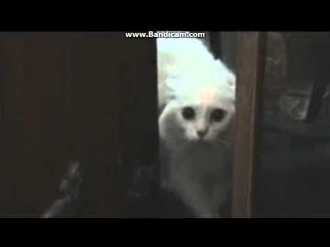 Котенок промяукал слово :Уходи!