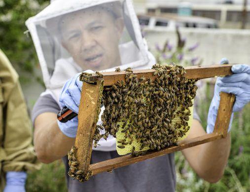 Beekeeper Marvin Jordana. | Backyard bee, Bee keeping ...
