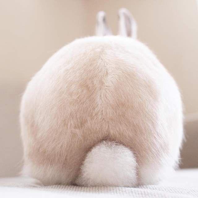《兔兔的帽子時尚秀》白胖胖的樣子搭什麼帽子都好看 ❤ - 圖片3