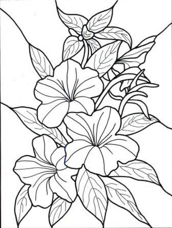 60 Imagenes De Flores Para Colorear Dibujos Colorear Imagenes Paginas Para Colorear De Flores Flor Hawaiana Dibujo Dibujos De Flores