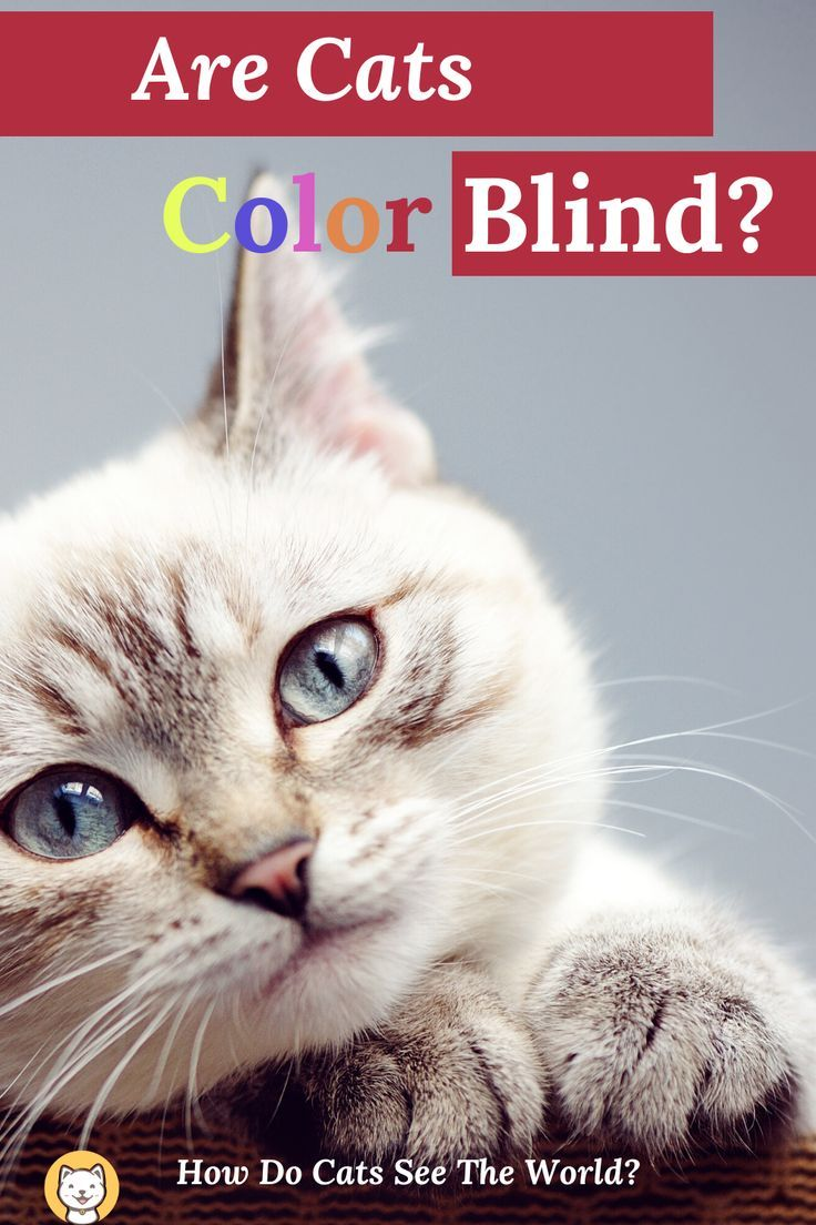 Are Cats Color Blind? How Do Cats See The World? in 2020