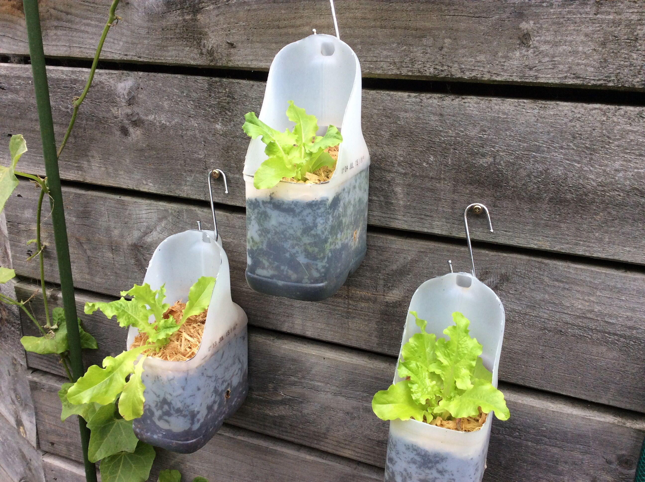 a26f2a64b3b98eae6ee206390c086d76 - How To Use Plastic Containers For Gardening
