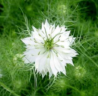 Bring heirloom seeds from the Thomas Jefferson... | The ...  |Thomas Jefferson Garden Seeds