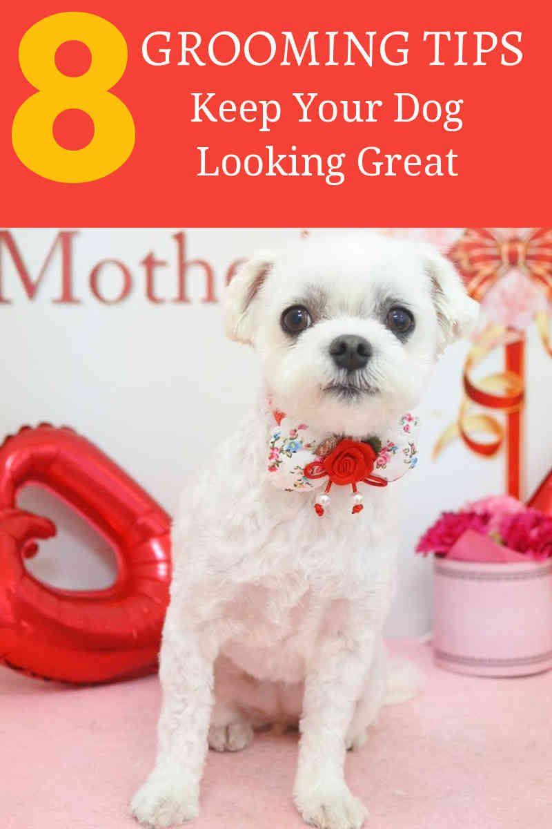 Choosing The Right Dog Grooming Bath Dog Grooming At Home