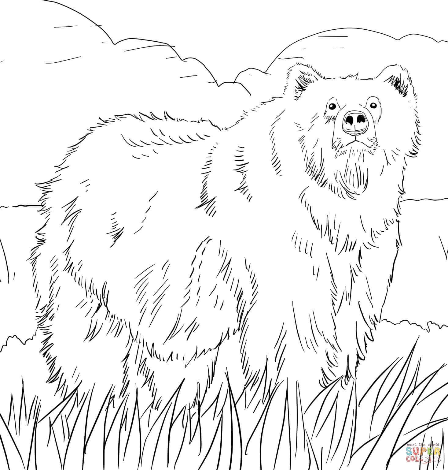 Grizzly Bear Coloring Page Google Search