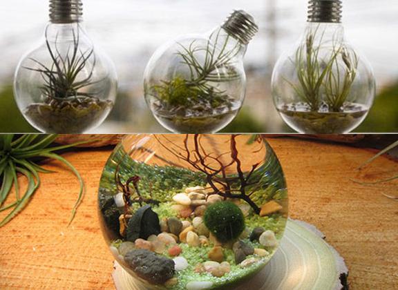 transformer une ampoule en aquarium aquarium ampoule et tout le. Black Bedroom Furniture Sets. Home Design Ideas