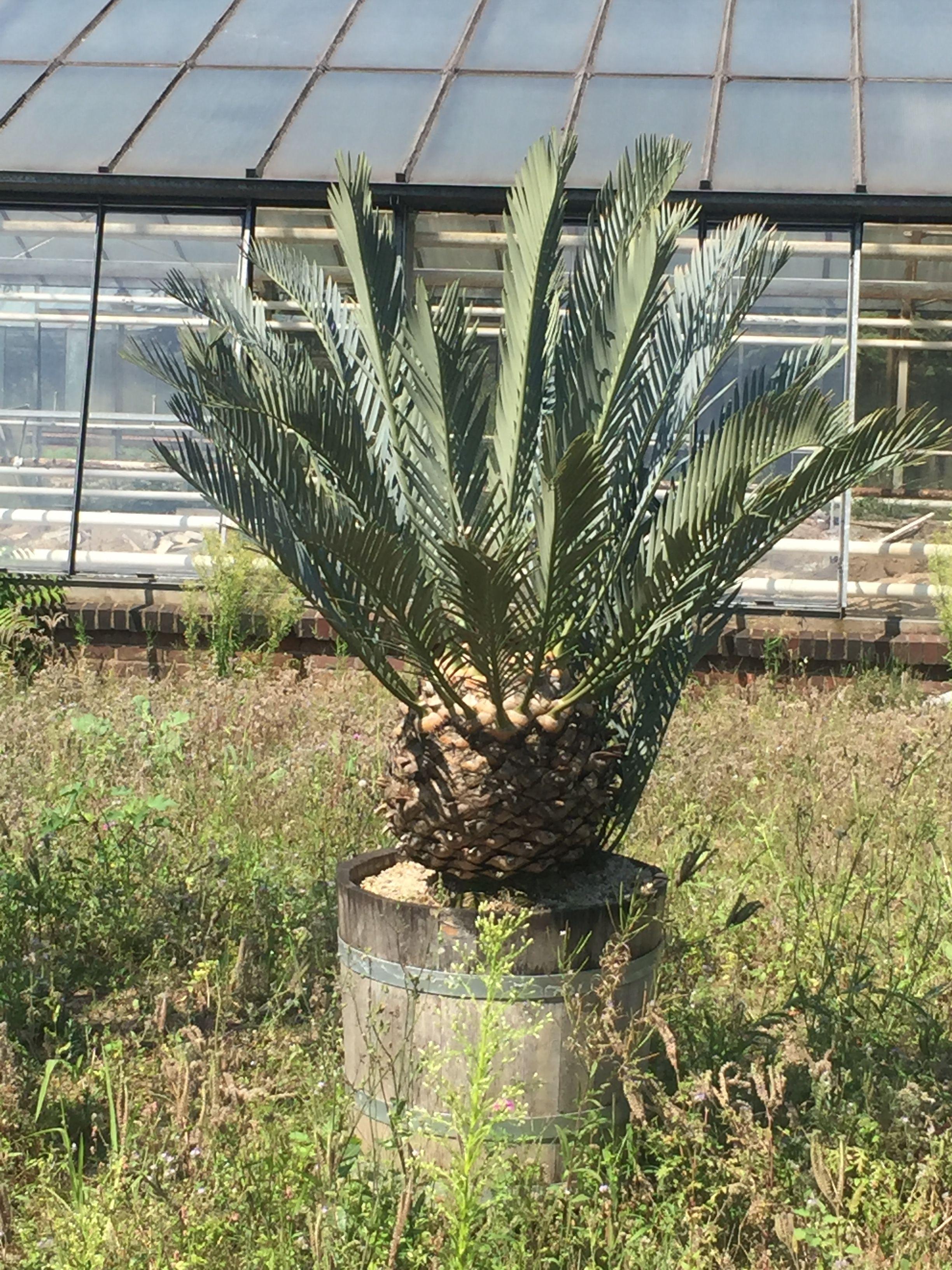 Best Flora botanischer Garten in K ln