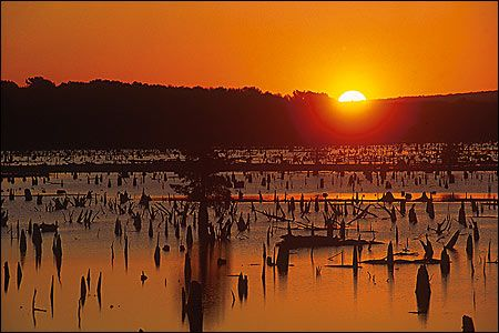 Lake Conway Sunrise: At 6,700 acres, Lake Conway is still the largest lake ever built by a state wildlife agency even though the impoundment is over 50 years. Although the lake has been known for its bream and crappie fishing, throughout its history the constant thread has always been its strong bass population.Conway was built around a living forest, and while most of the above-surface dead timber has fallen over the years, beneath the surface it's an absolute jungle. Log jams, stumps…