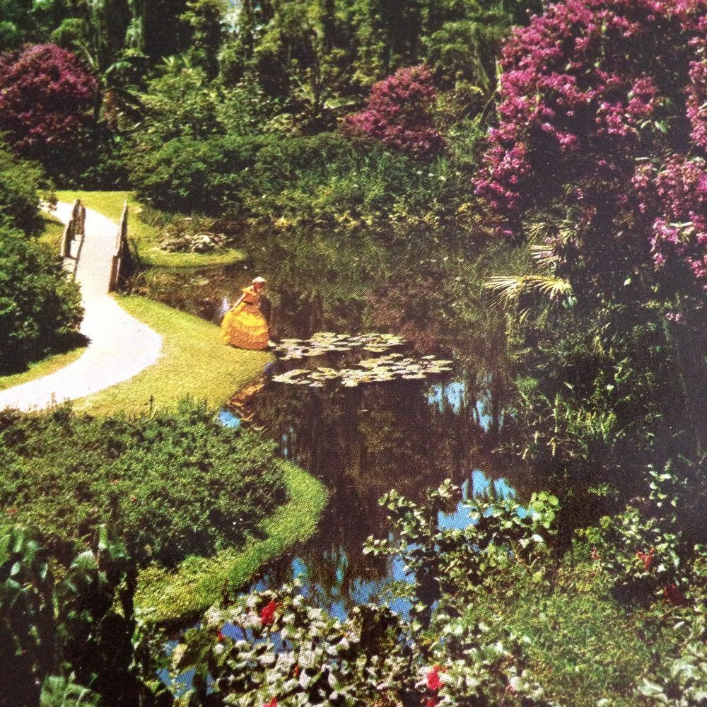 Cypress Gardens Southern Belle Postcard Water Lily Pads Winding Path ...