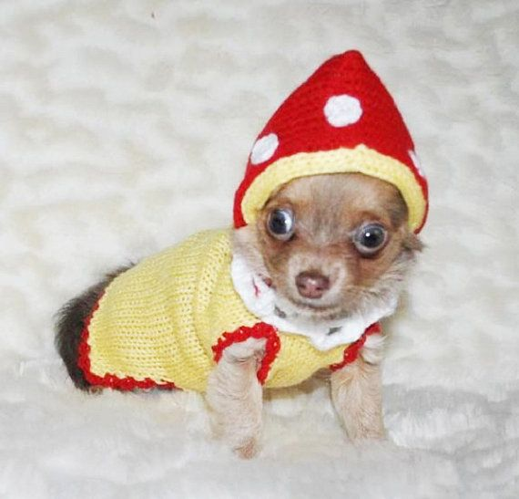 Small Dog Clothes Dog Costumes Mushroom Chihuahua Clothes