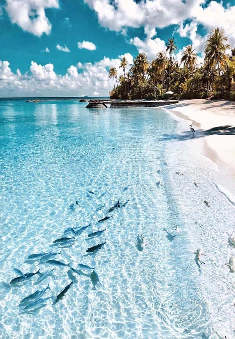 Fishes In Clear Water Look Awesome On Beach Nature Travel Beautiful Places Places To Travel