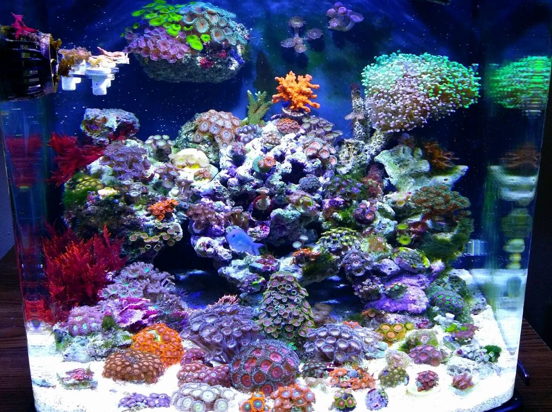 Saltwater Tank Love The Colorful Coral Marine Fish Tanks Saltwater Aquarium Setup Marine Aquarium