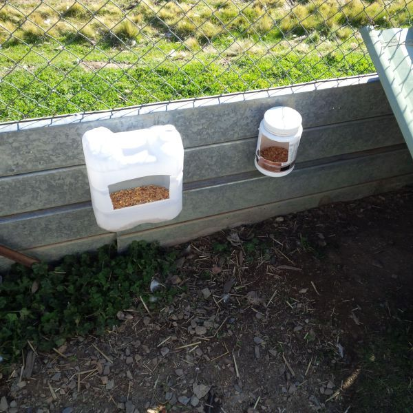 duck feeders1 | Backyard ducks, Raising ducks, Modern hippie