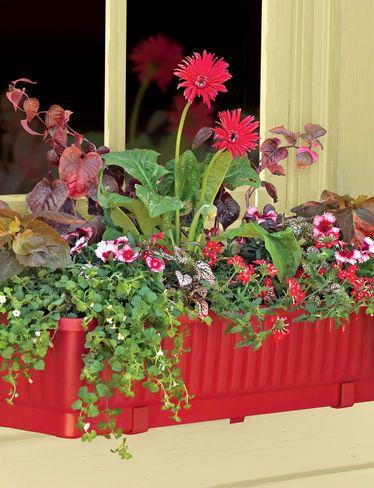 a273bae0f25e90969fe46fde70b8ed0d - Gardeners Supply Self Watering Window Box