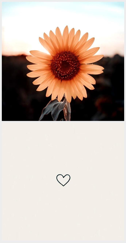 sunflower wallpaper - #background #sunflower #Wallpaper