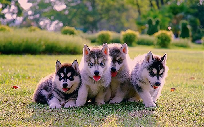 Wallpaper Puppies