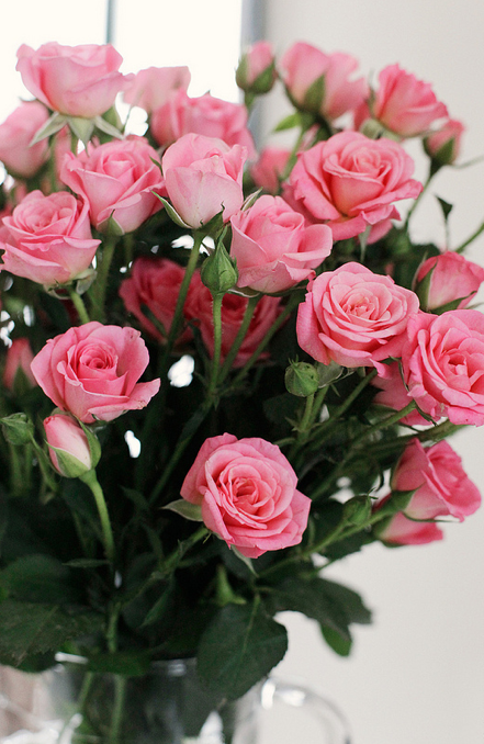 beautiful pink flowers an image on imgfave pinterest pink roses rose and flowers