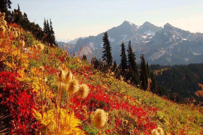 Alpine Meadow    www.wunderground.com