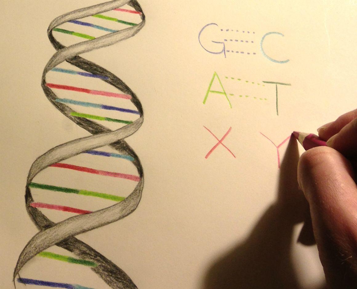 O ADN da nova bactéria, que se reproduz mais ou menos normalmente, integra…