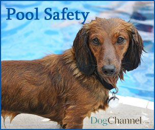 Keep Fido Safe Around The Pool Too Dog Pool Pet Water Safety Pet Saftey