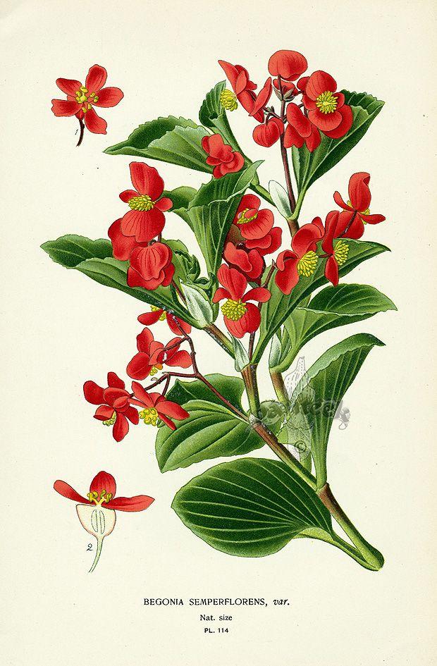 Step Botanical Prints 1896