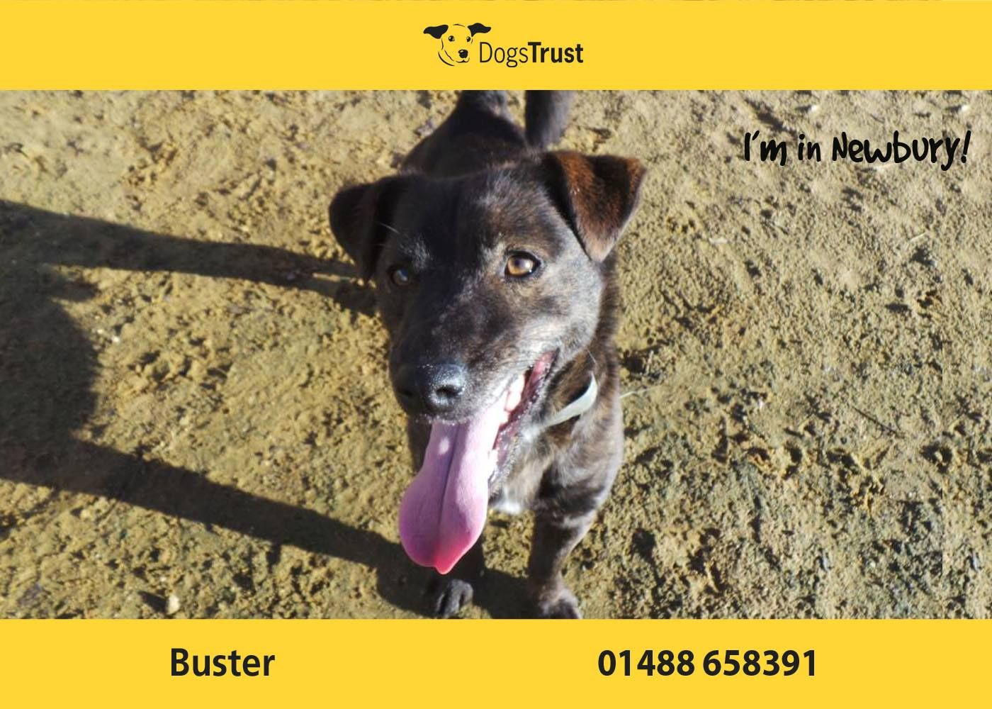 Buster here from dogs trust newbury likes his own space