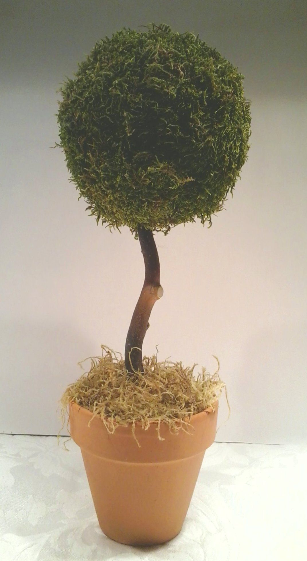Topiary I made with live Sheet Moss from Joshsfrogs.com for my son's wedding.