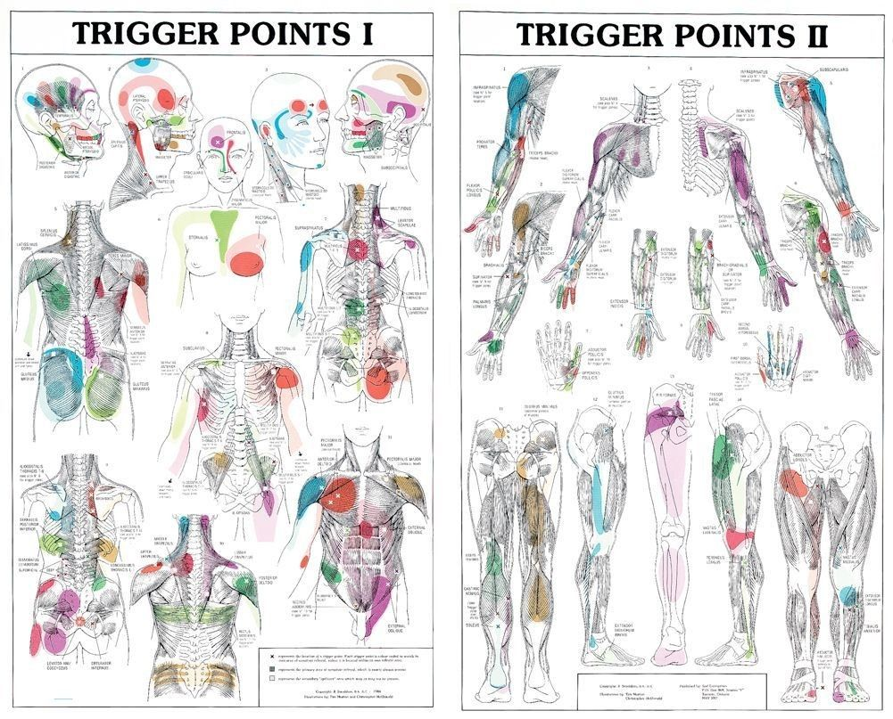 Trigger Points I And Ii 21x43 Each Trigger Points Trigger Point Therapy Reflexology Foot Chart