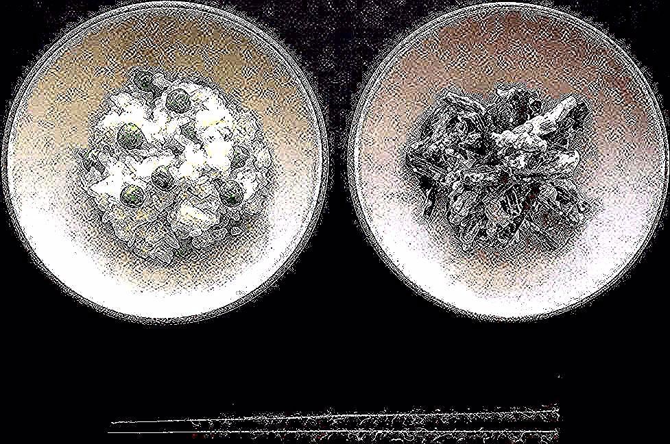 via @madaraneko1122: Din dins  Simple Japanese comfort food tonight. #mamehohan & Beet Leaf #shiraae . . . 豆ごはんと昨日ビーツとゆで玉子のピクルスを仕込んだ残りのビーツの葉っぱで白和え . . . . . .  #farmtofork #cityoftrees #cheflife #japanesefood #offduty #japanesecomfortfood #豆ごはん #ビーツの葉 #白和え #素食 #地産地消 #いただきます #連続投稿ごめんなさい #中年に優しいご飯  #写ってないが汁物も実はある #長タグうざいですねゴメンなさい(笑)