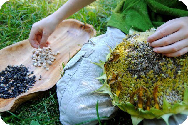 Saving sunflower seeds