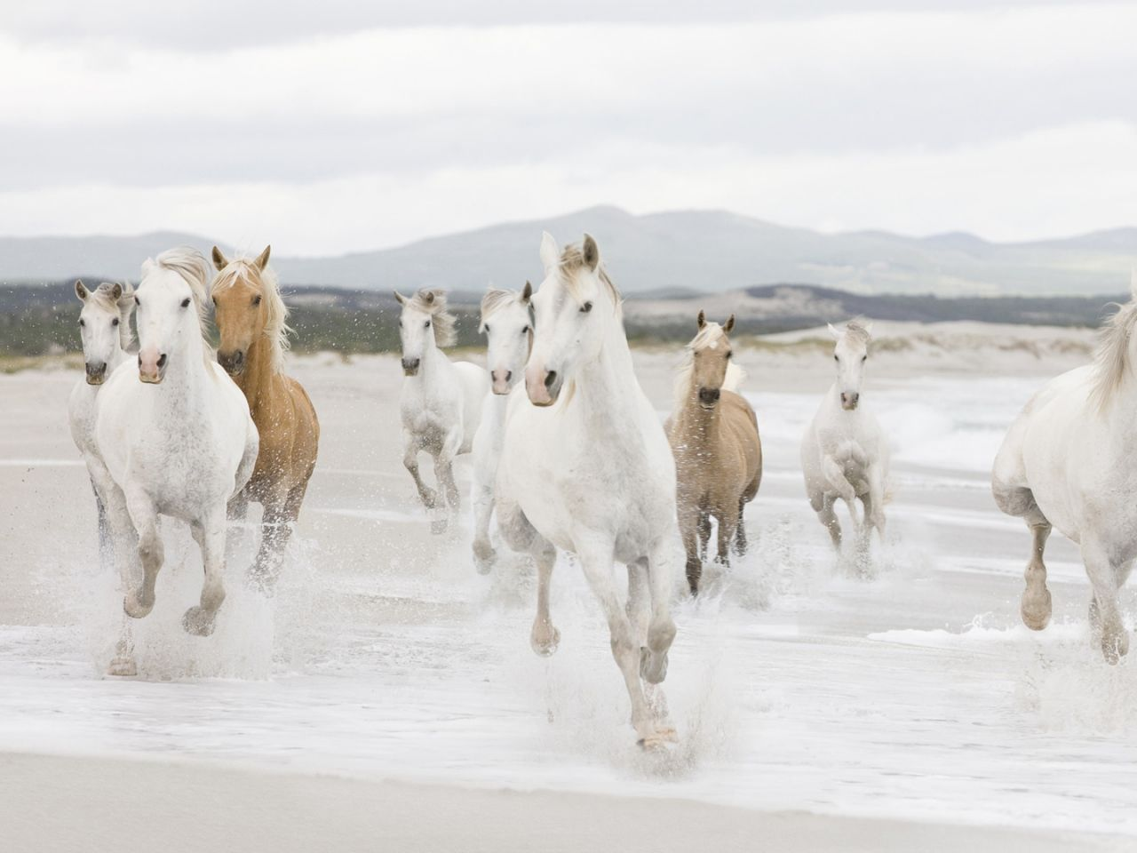 lauma kuvia, hevonen taustakuvia, ranta vektori, vesi taustat, paeta materiaali