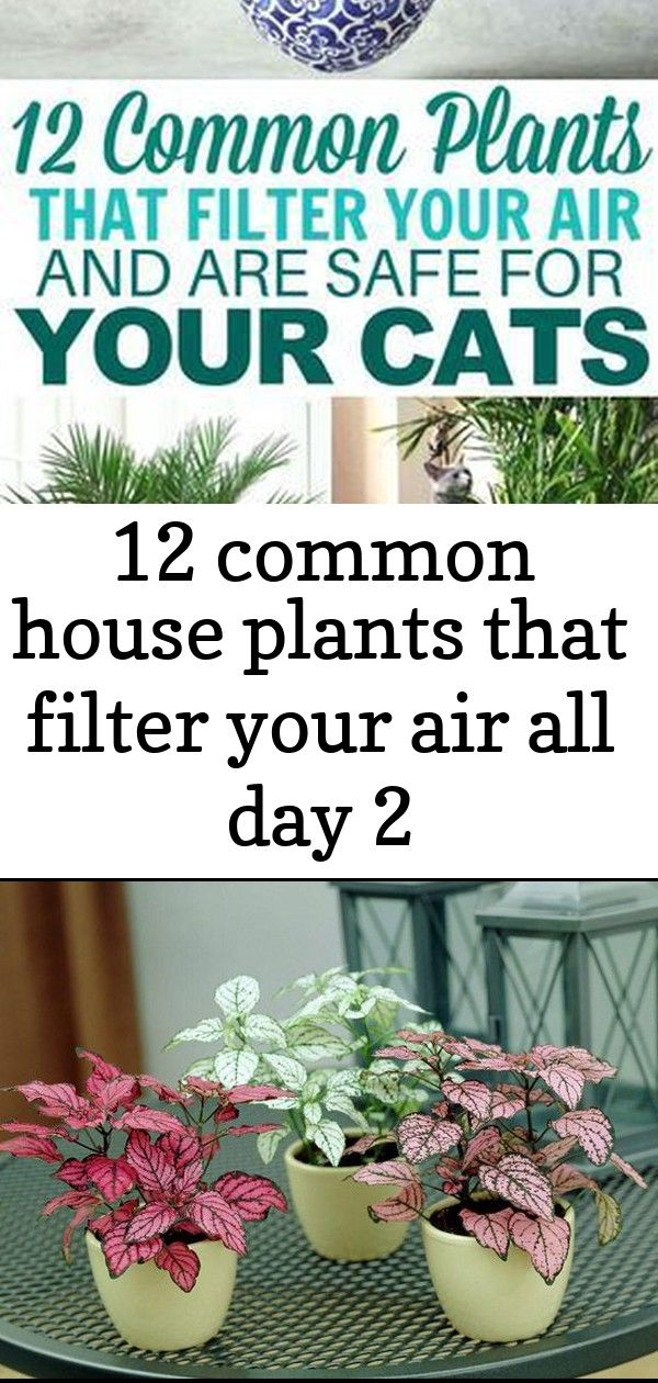 12 common house plants that filter your air all day 2 These cat friendly plants are AMAZING at filtering indoor air They keep my home smelling fresh and I dont have to wo...