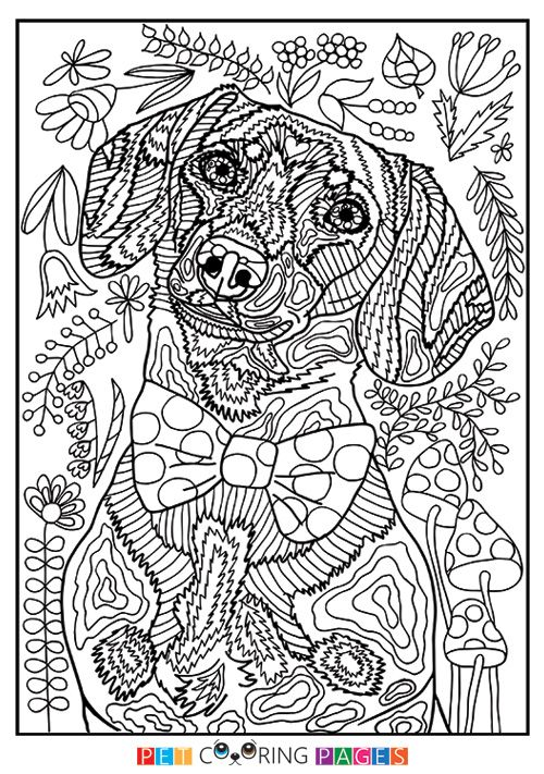 free printable dachshund coloring page available for download simple and detailed versions for adults and