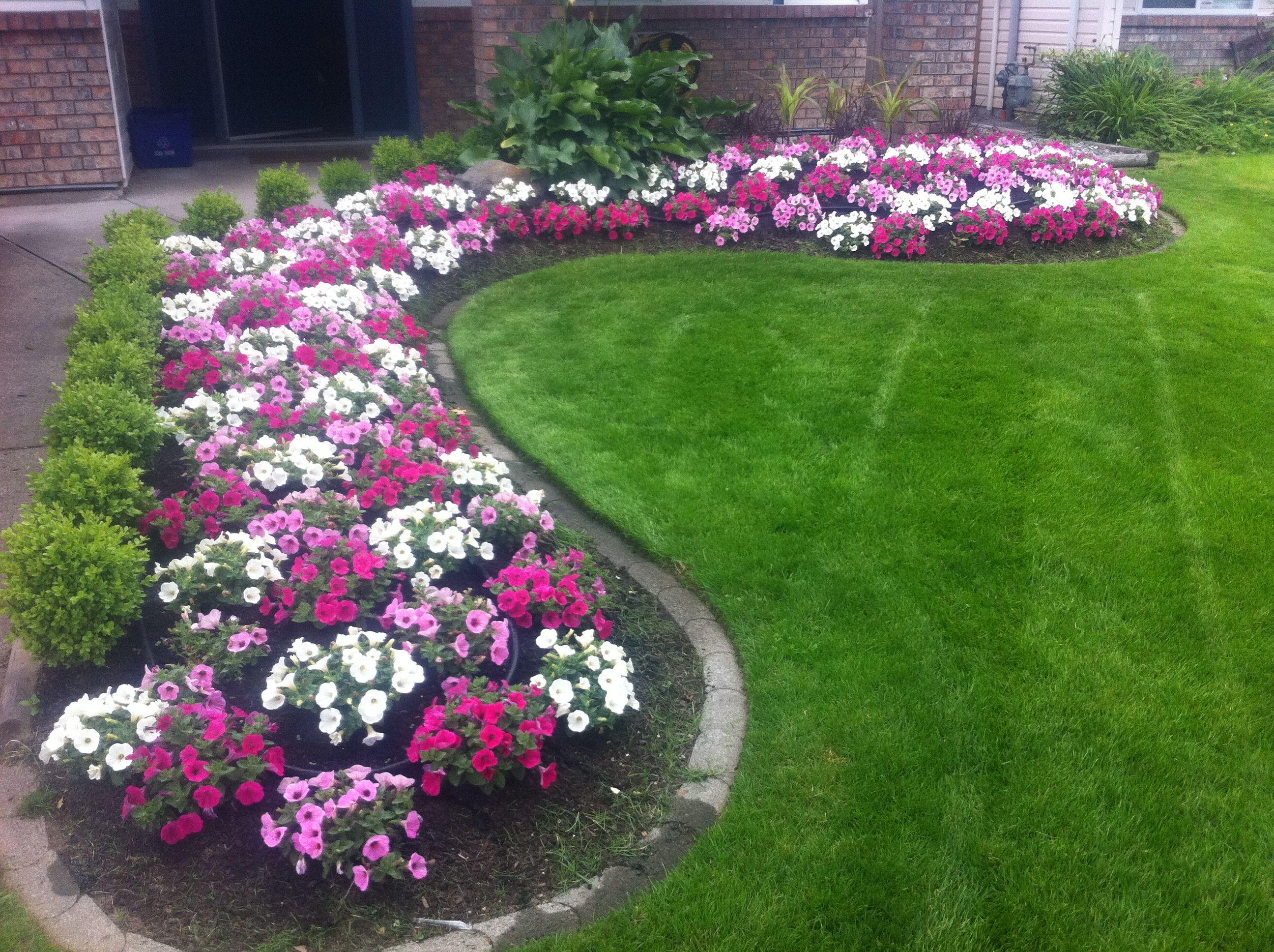 Pin By Jason Vandermey On Annuals Front Garden Design Front Yard Landscaping Front Yard Landscaping Design