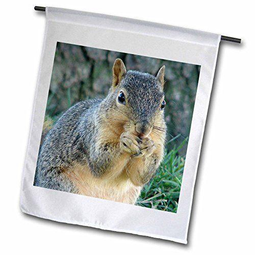 Robot Check | Eating acorns, Garden flags, Squirrel