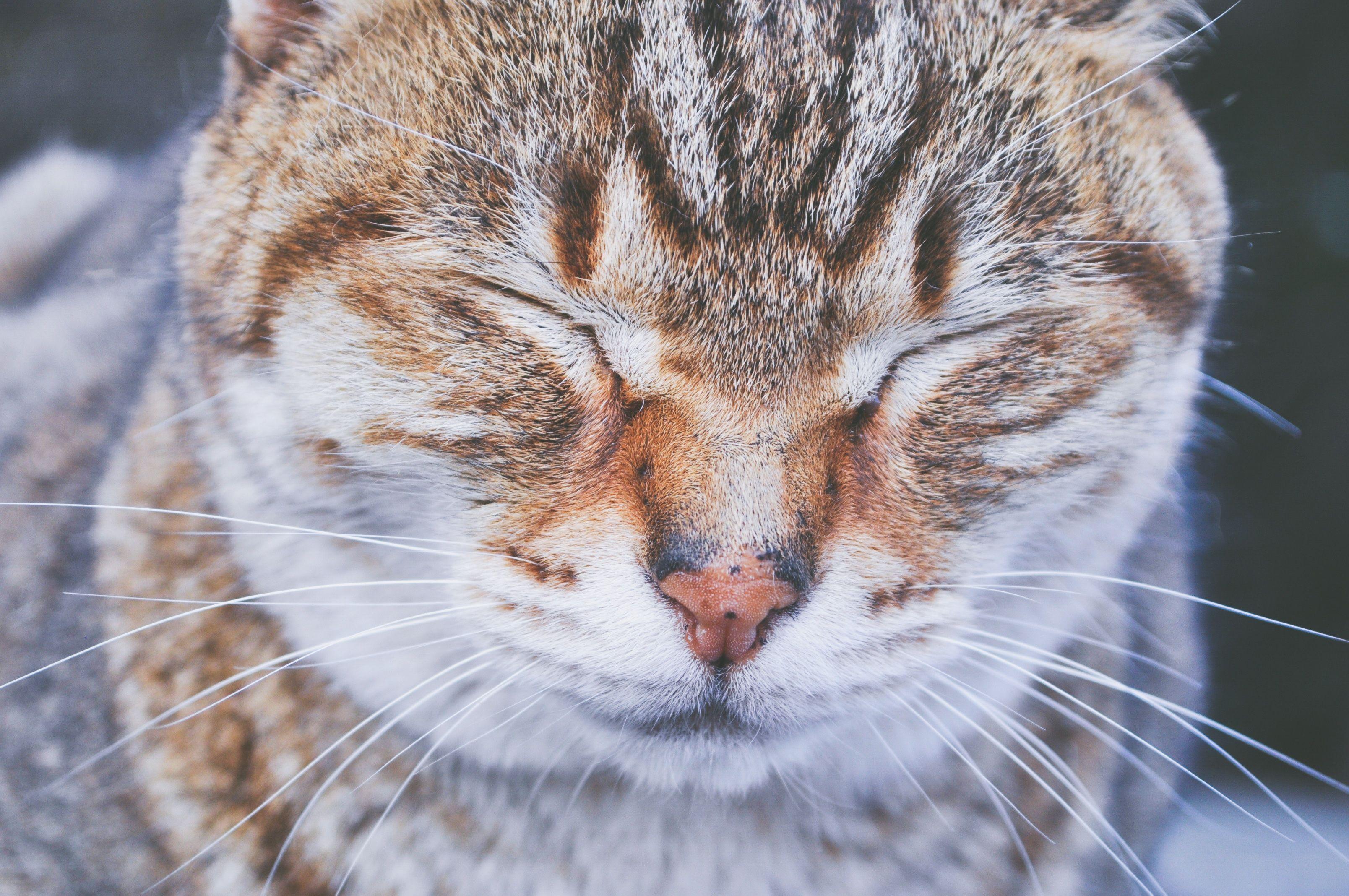 Cute Cat Squinting Sleepy Cat Cats Cat Photo