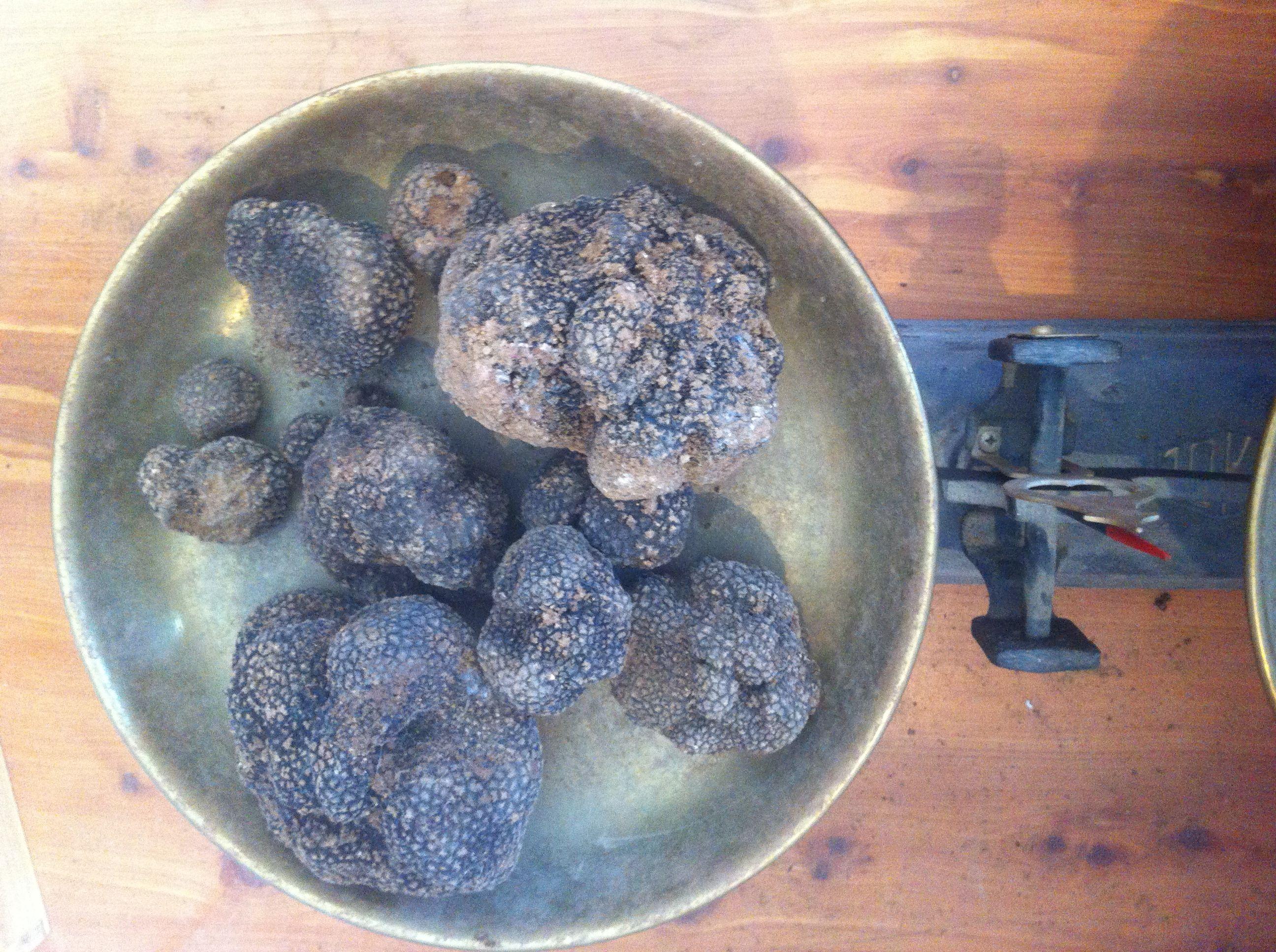 La Trufa Negra se caza, se come y se duerme. Tuber Melanosporum en Mora de Rubielos #trufiturismo #sienteteruel