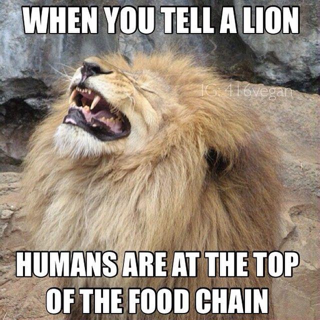 Instagram Photo By Vegan Memes 416vegan Aug 24 2014 At 2 36pm Utc Vegan Memes Memes Cats