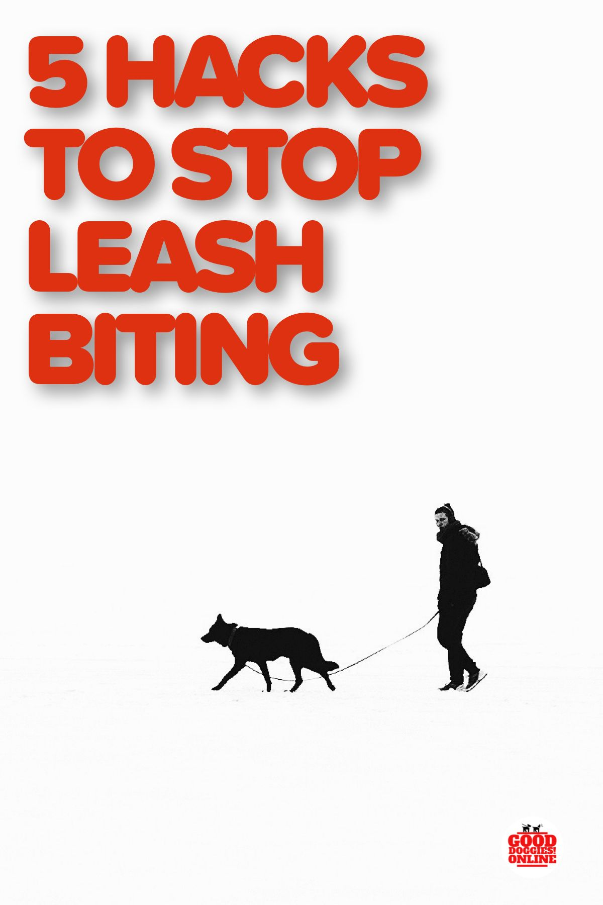 5 Hacks On How To Train Your Dog To Stop Biting The Leash Dog